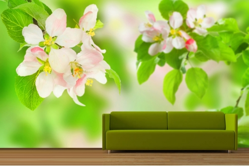 apple-blossom-501x334